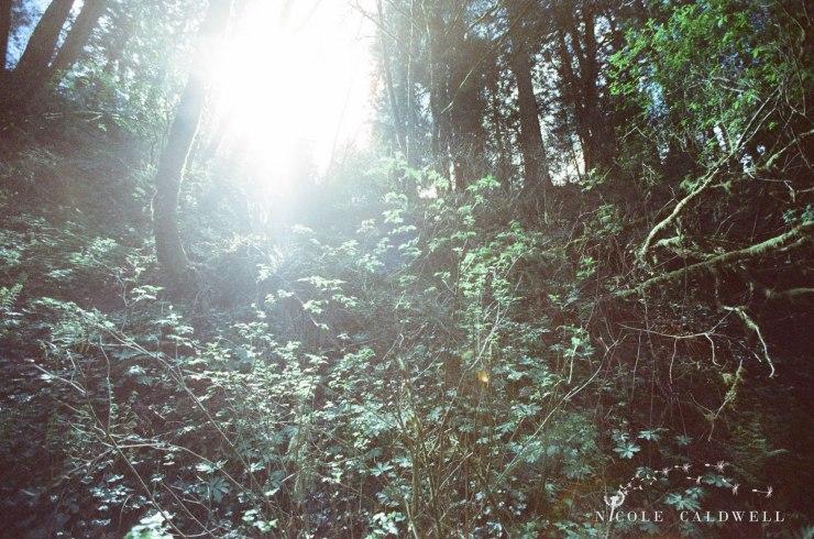 cinestill_film_forest_park_portland01