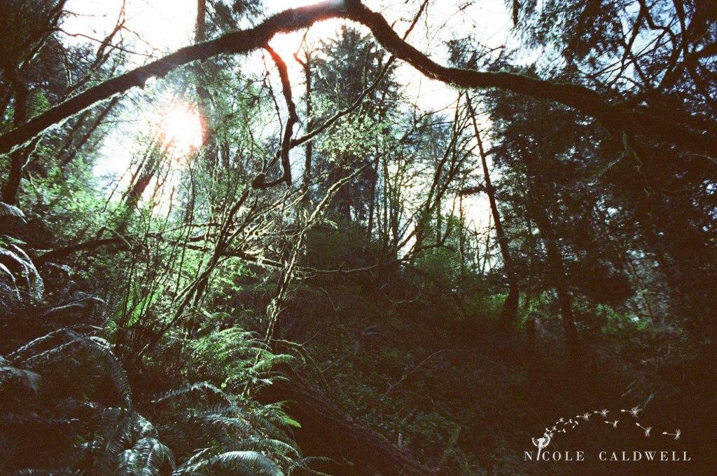 cinestill_film_forest_park_portland02