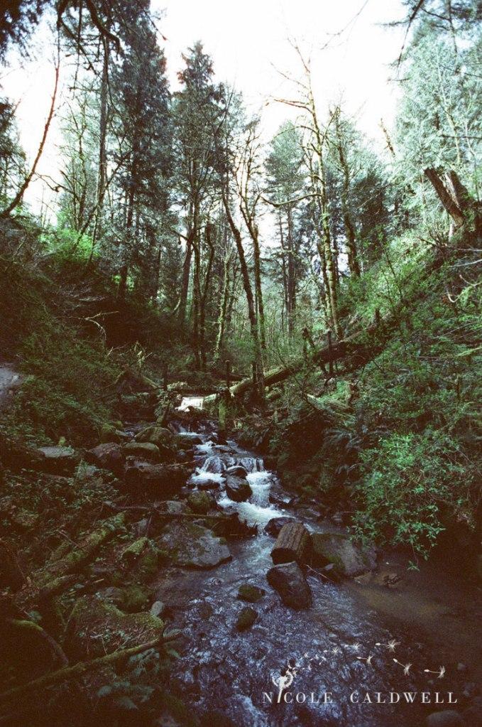 cinestill_film_forest_park_portland03