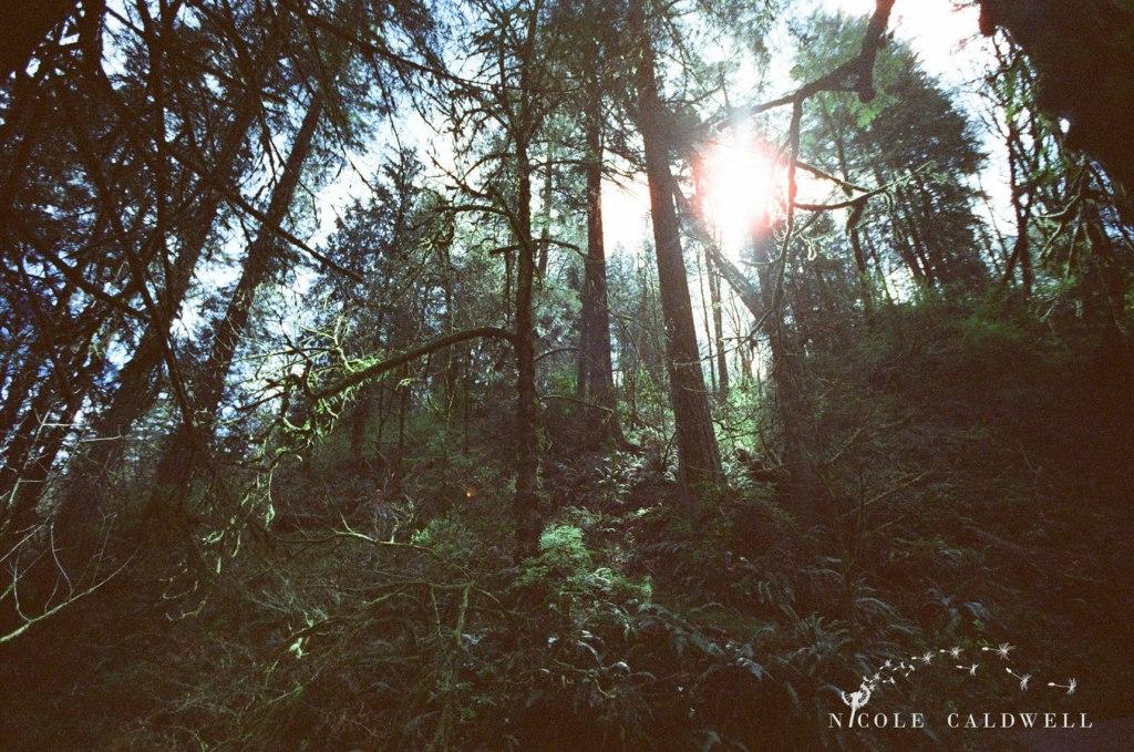 cinestill_film_forest_park_portland04