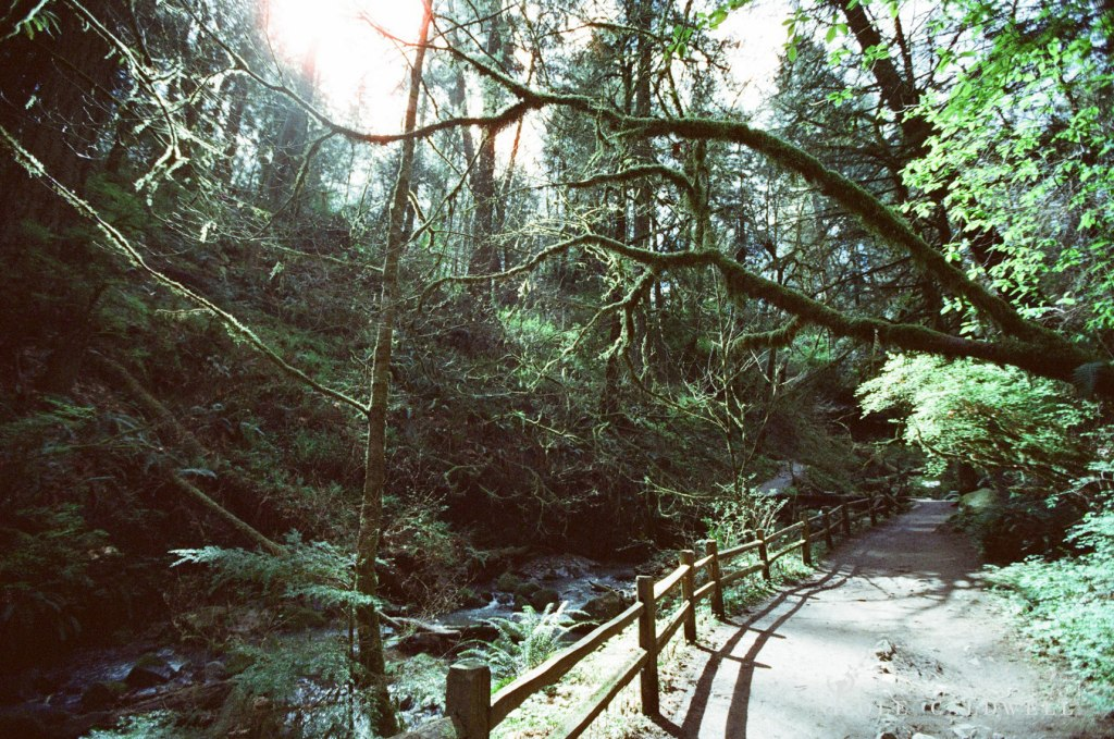 cinestill_film_forest_park_portland05