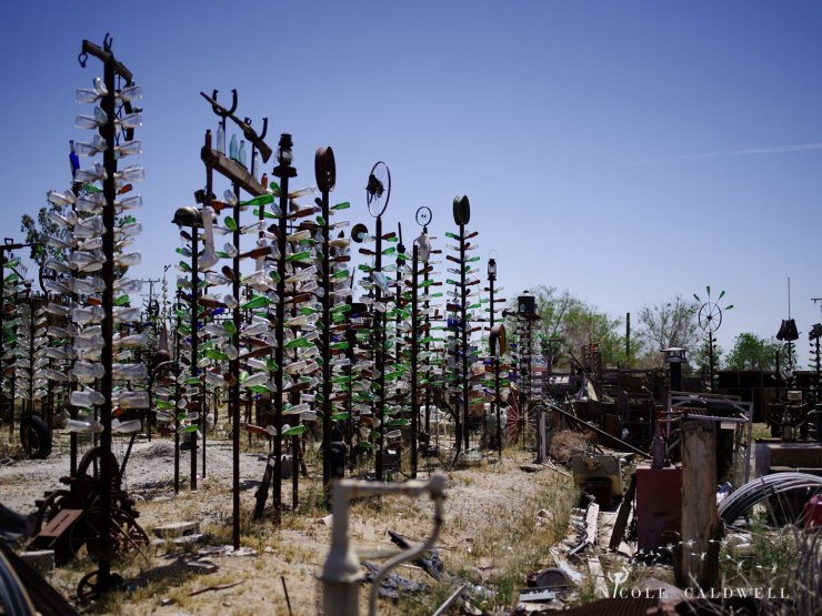 pentax-645z-at-Elmers-Bottle-Tree-Ranch-route-66-18