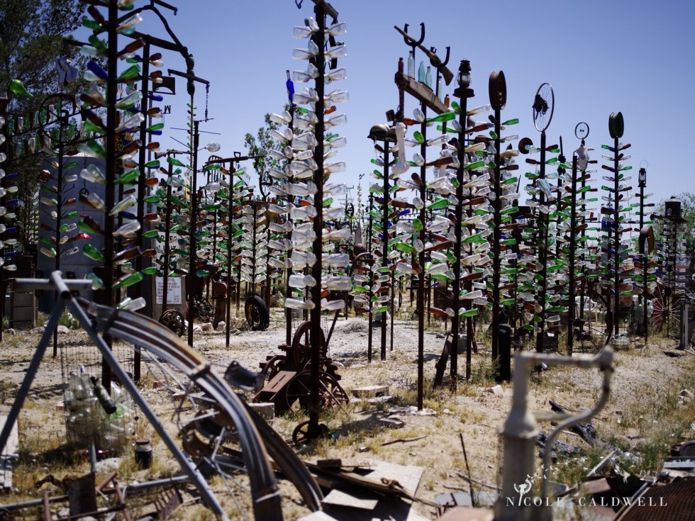 pentax-645z-at-Elmers-Bottle-Tree-Ranch-route-66-19