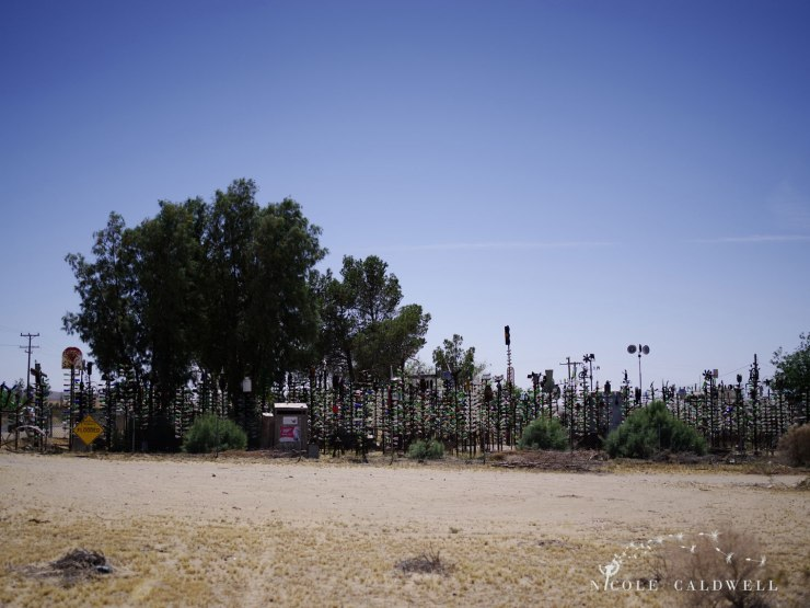 pentax-645z-at-Elmers-Bottle-Tree-Ranch-route-66-25