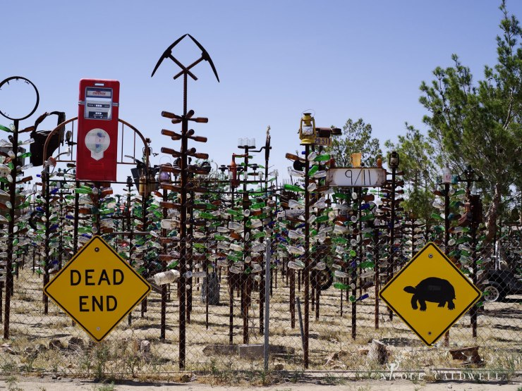 pentax-645z-at-Elmers-Bottle-Tree-Ranch-route-66-32