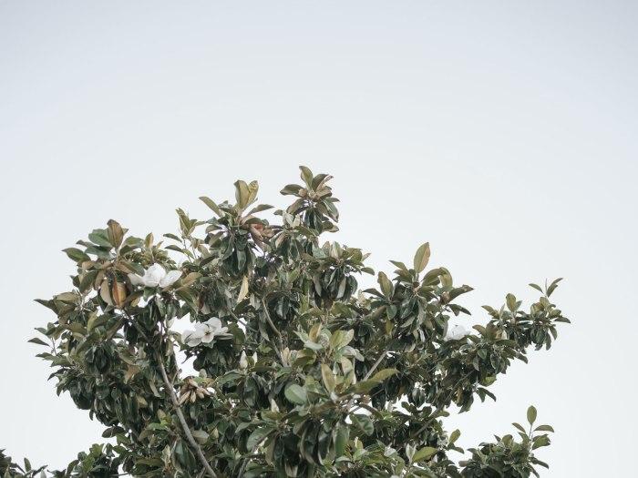 pentax-645z-magnolia_nicole-Caldwell_207