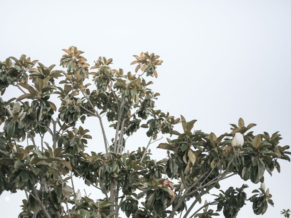pentax-645z-magnolia_nicole-Caldwell_211