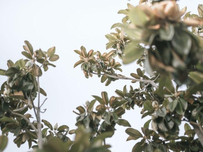 pentax-645z-magnolia_nicole-Caldwell_212