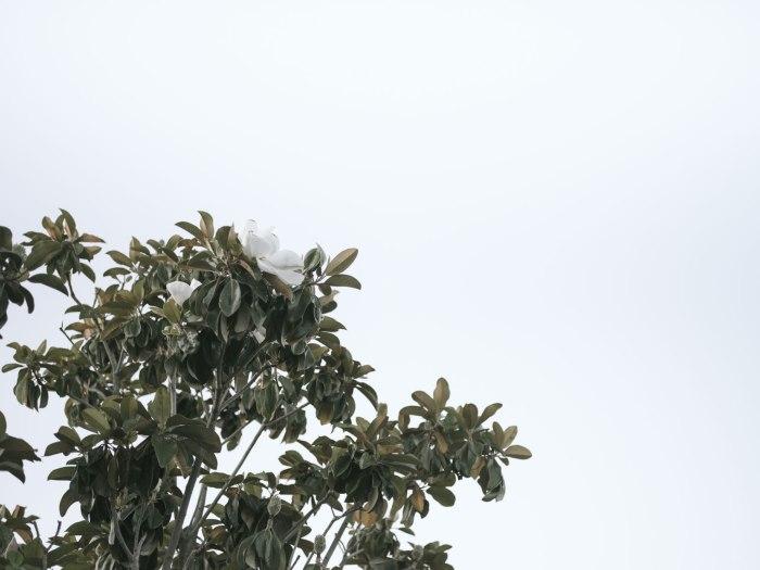 pentax-645z-magnolia_nicole-Caldwell_213