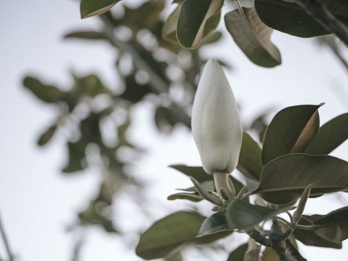 pentax-645z-magnolia_nicole-Caldwell_215