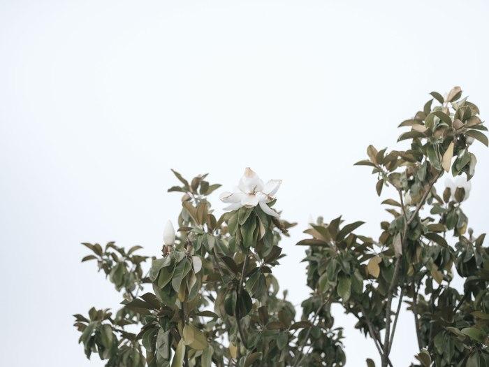 pentax-645z-magnolia_nicole-Caldwell_224