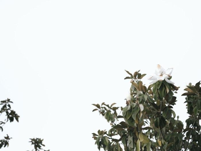 pentax-645z-magnolia_nicole-Caldwell_225