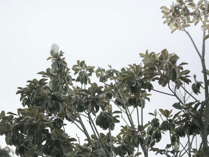 pentax-645z-magnolia_nicole-Caldwell_228