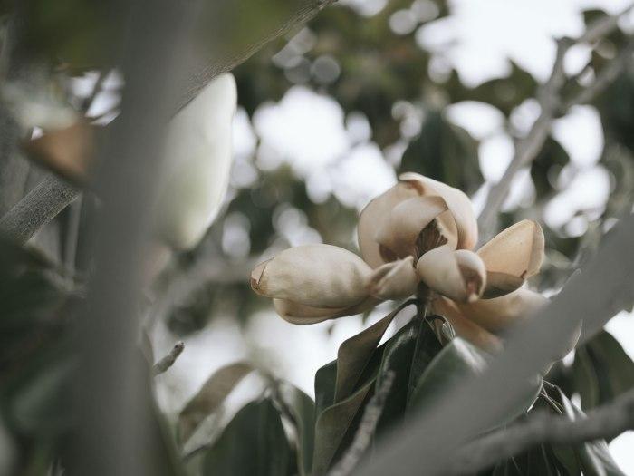pentax-645z-magnolia_nicole-Caldwell_231