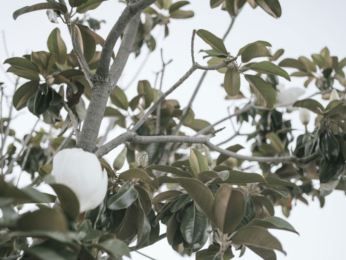 pentax-645z-magnolia_nicole-Caldwell_233