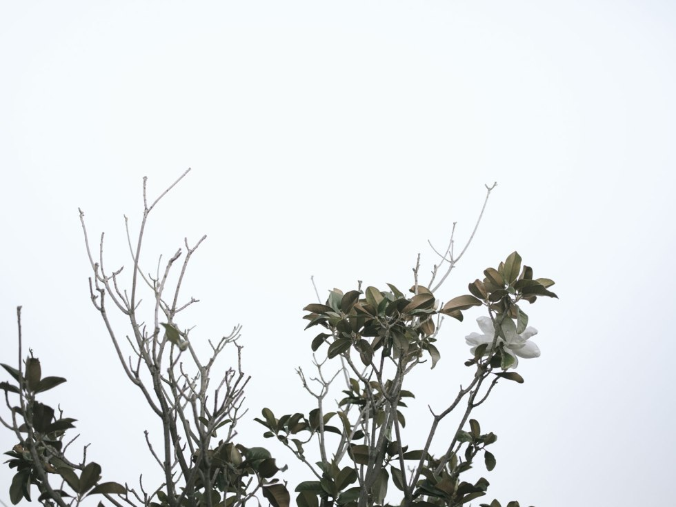 pentax-645z-magnolia_nicole-Caldwell_239