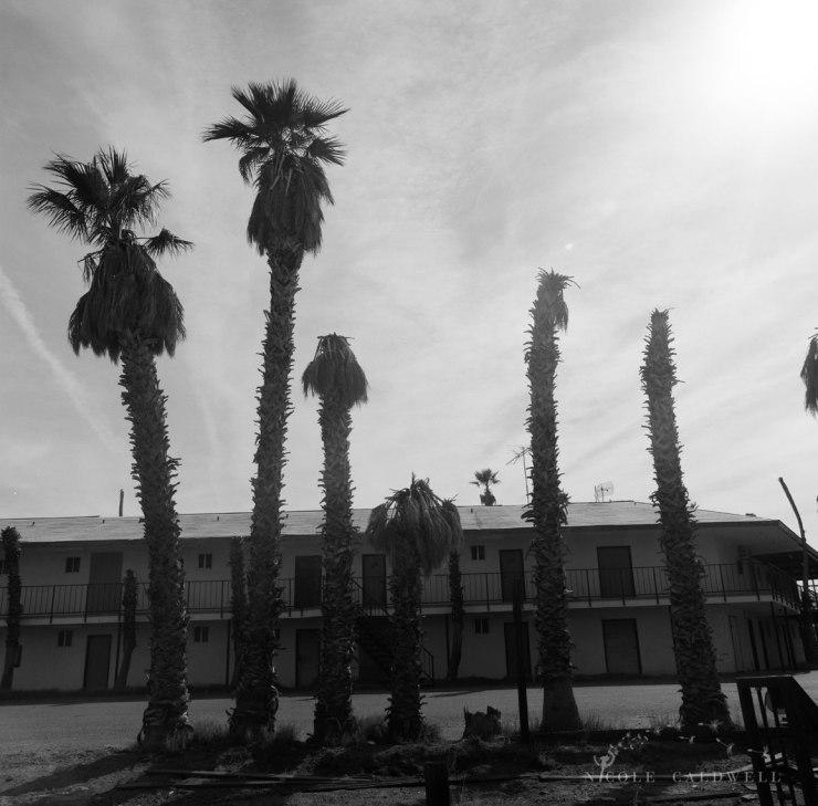 royal-hawaiian-motel-baker-california-04