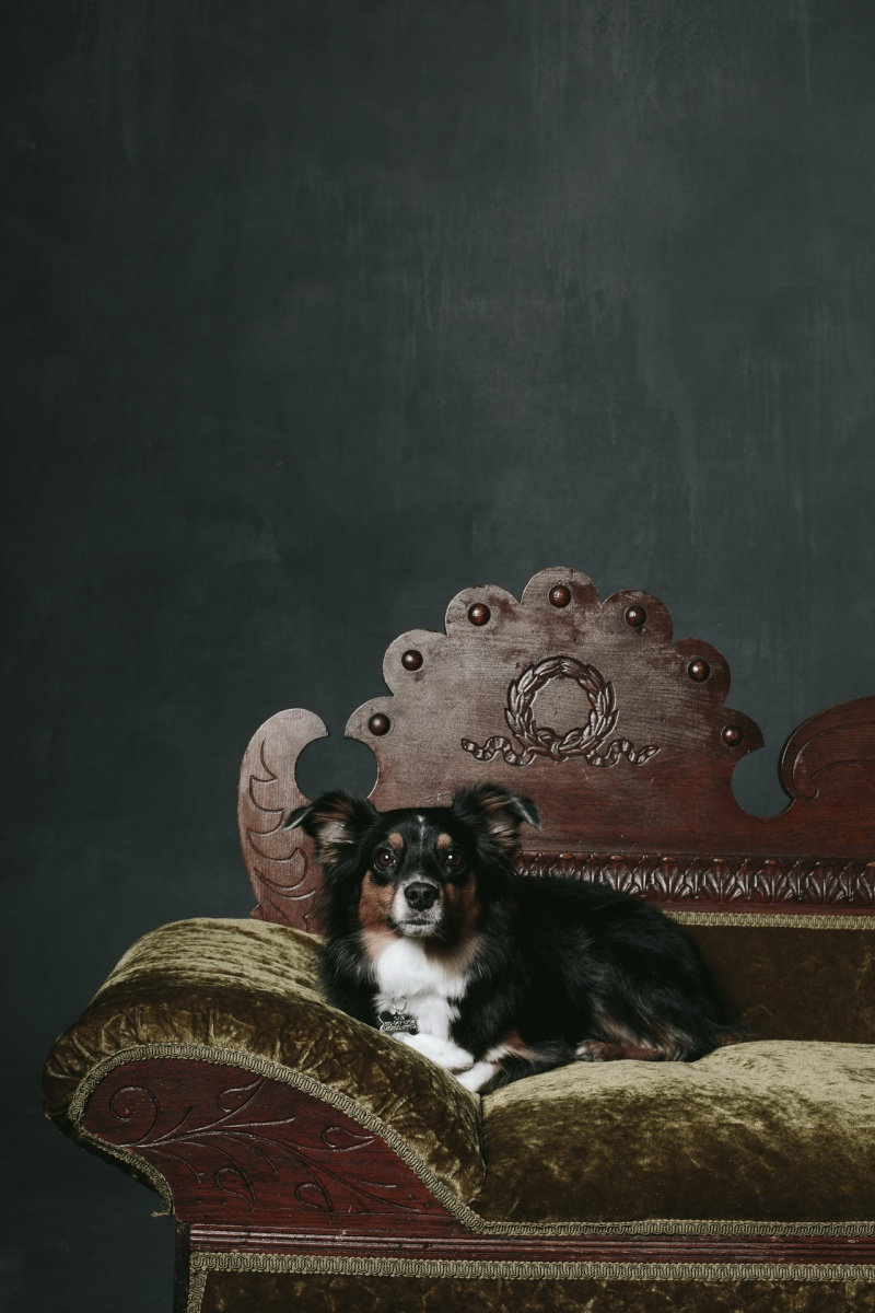 traditional photographs with dogs studio nicole caldwell 03