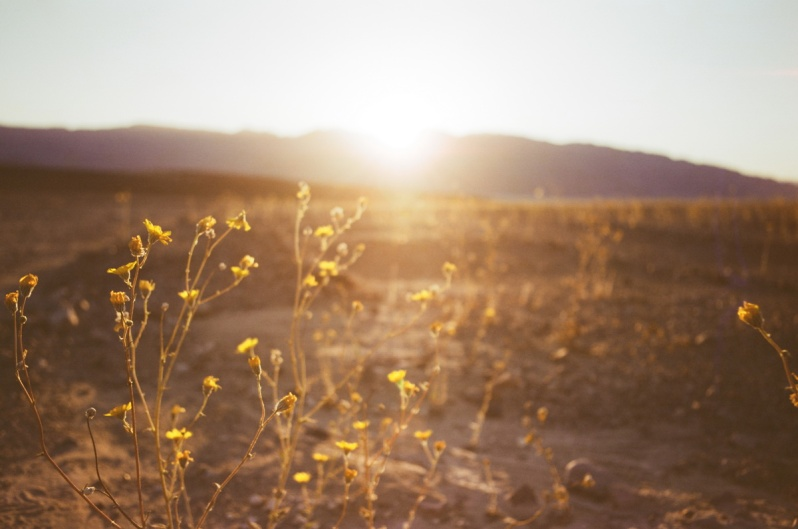 death valley super bloom 2016 nicole calwell 02